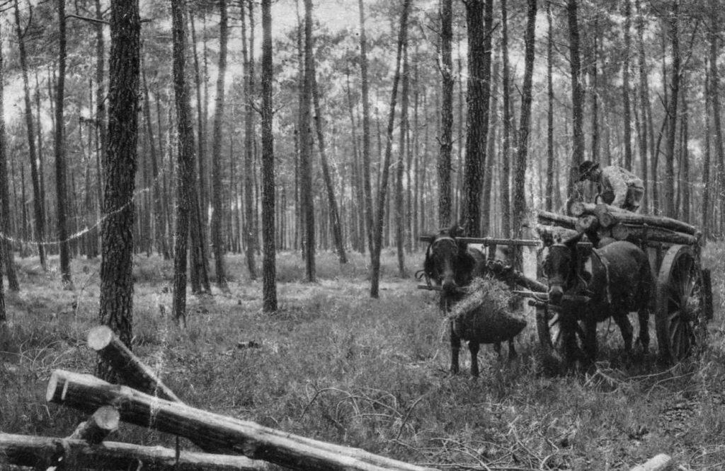 Le bois était  amené au bassin sur des charrettes