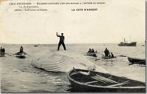 Carte postale de 1910, Bassin d'Arcachon.