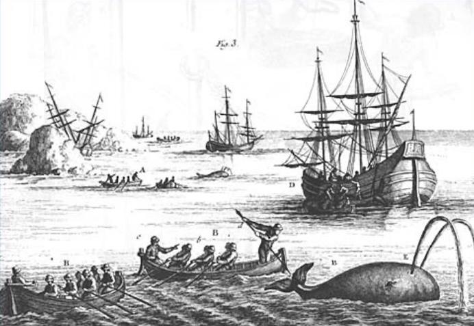 La chasse à la baleine, XVIIIe siècle. Henri-Louis Duhamel du Monceau